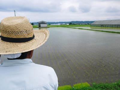 無農薬の『雑穀米』、『発芽玄米』の販売に向けて! その1_a0254656_19404480.jpg