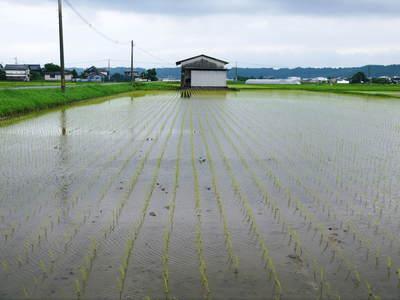 無農薬の『雑穀米』、『発芽玄米』の販売に向けて! その1_a0254656_19465338.jpg