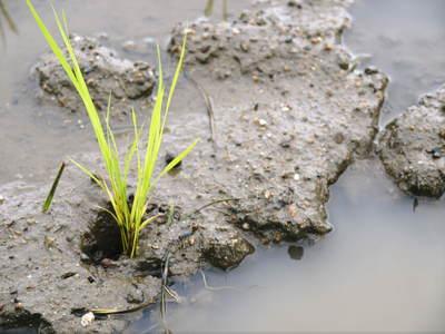 無農薬の『雑穀米』、『発芽玄米』の販売に向けて! その1_a0254656_19541157.jpg