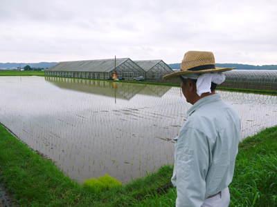 無農薬の『雑穀米』、『発芽玄米』の販売に向けて! その1_a0254656_20134884.jpg