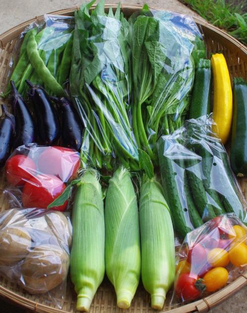 今週の野菜セット(8/25~8/29着)_c0110869_12475933.jpg