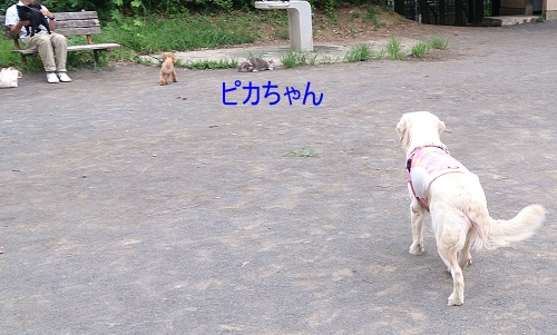 b0136381_16421732.jpg