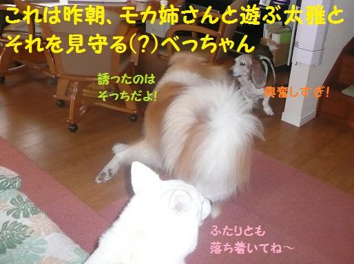 f0121712_8152125.jpg