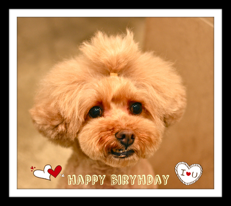 Happy Birthday♡プリン_d0060413_18492797.jpg