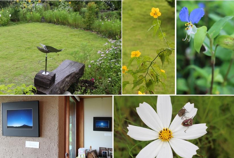 雨降りの庭では_a0212730_18515754.jpg