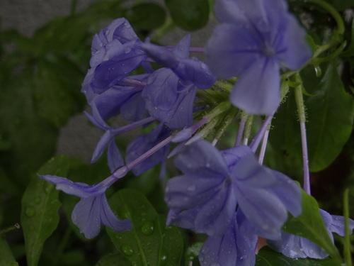 お花と話す_e0240147_21155026.jpg