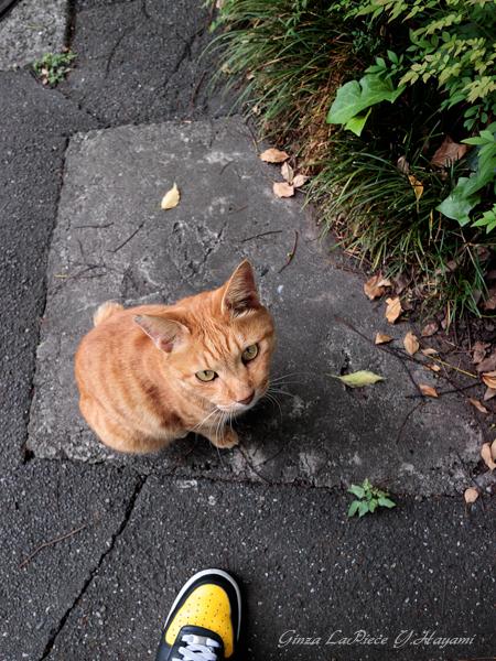 猫のいる風景 日比谷公園 見上げるチャッピー_b0133053_23584725.jpg