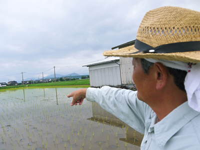 無農薬の『雑穀米』、『発芽玄米』の販売に向けて! その2_a0254656_16391998.jpg