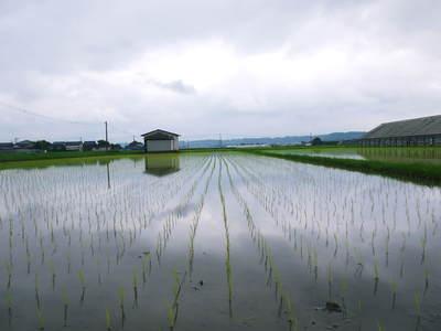 無農薬の『雑穀米』、『発芽玄米』の販売に向けて! その2_a0254656_17142410.jpg