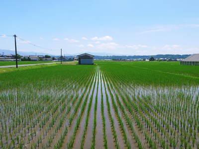 無農薬の『雑穀米』、『発芽玄米』の販売に向けて! その2_a0254656_1717534.jpg