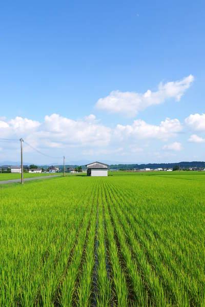 無農薬の『雑穀米』、『発芽玄米』の販売に向けて! その2_a0254656_17313920.jpg