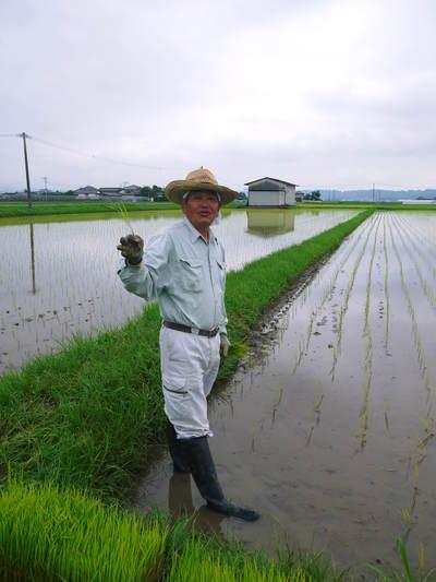 無農薬の『雑穀米』、『発芽玄米』の販売に向けて! その2_a0254656_17444637.jpg