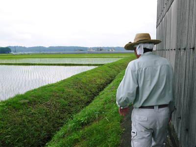 無農薬の『雑穀米』、『発芽玄米』の販売に向けて! その2_a0254656_18195021.jpg