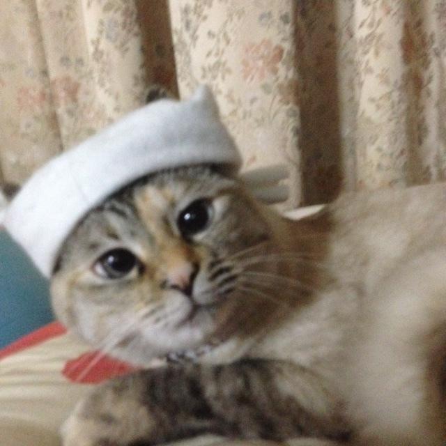 我が家の猫_b0228969_09594067.jpg