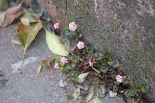 09/22 かわしまようこさんによる、 雑草教室 摘み草でガレット_b0284270_22514631.jpg