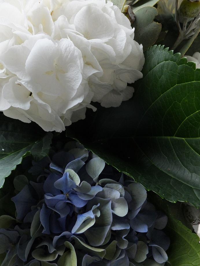 オークリーフ(紫陽花と、ユーカリとティヌスの実のアレンジメント)_f0049672_15504241.jpg