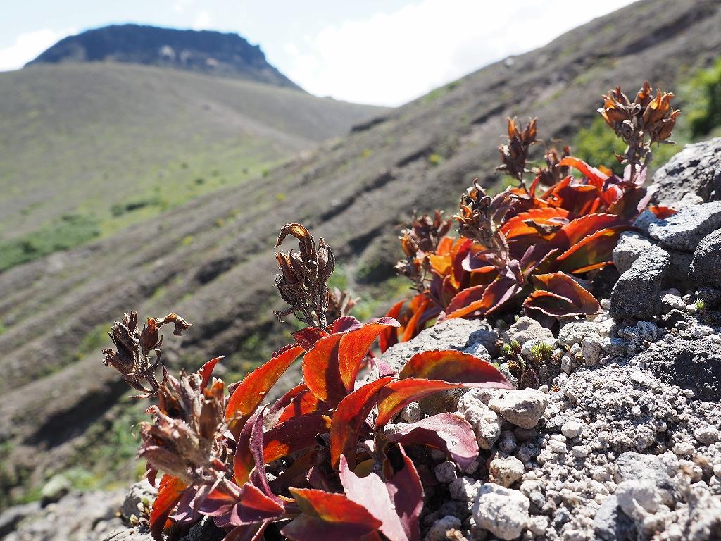 樽前山(932m峰)、8月25日-速報版-_f0138096_15562125.jpg
