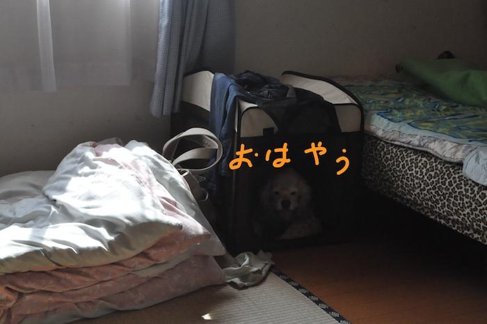 b0067012_0543476.jpg
