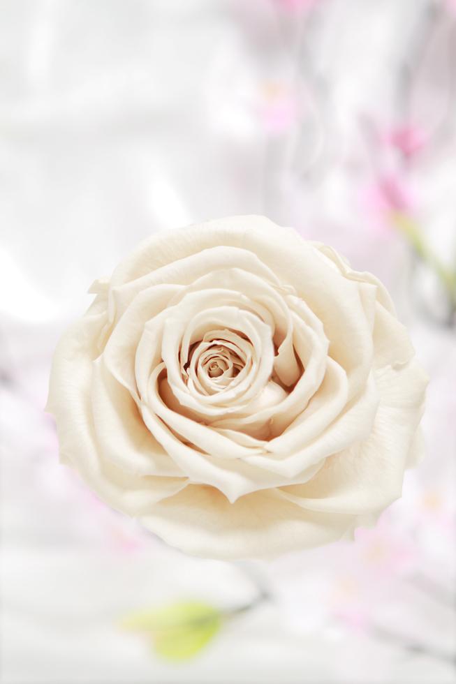 愛をこめて花束を_a0165018_10534352.jpg