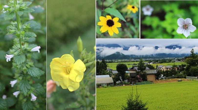白と黄色の花_a0212730_15491987.jpg