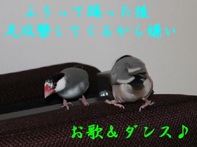 c0365734_23300557.jpg