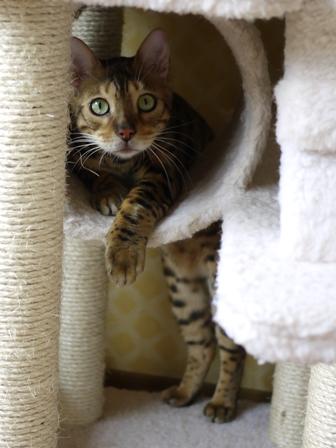猫のお留守番 虎太朗くんあずきちゃんももちゃん編。_a0143140_2251231.jpg