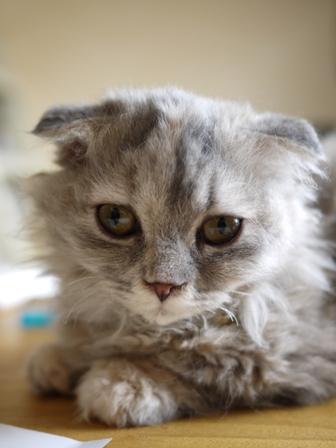 猫のお留守番 虎太朗くんあずきちゃんももちゃん編。_a0143140_22543269.jpg