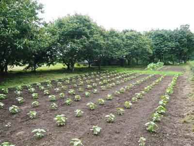 田舎暮らしの台風15号の爪痕と農業への熱い思い!_a0254656_17291418.jpg