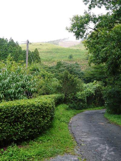 田舎暮らしの台風15号の爪痕と農業への熱い思い!_a0254656_17473130.jpg