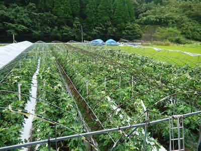 田舎暮らしの台風15号の爪痕と農業への熱い思い!_a0254656_1981237.jpg