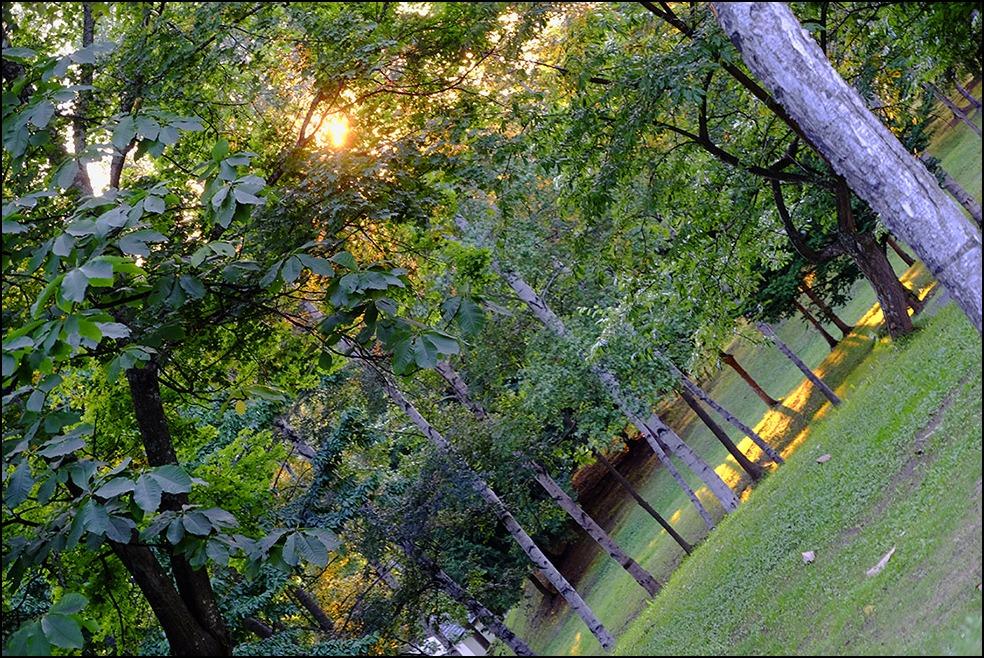 木漏れ日に囲まれての夕方のお散歩でした_a0031363_115919.jpg