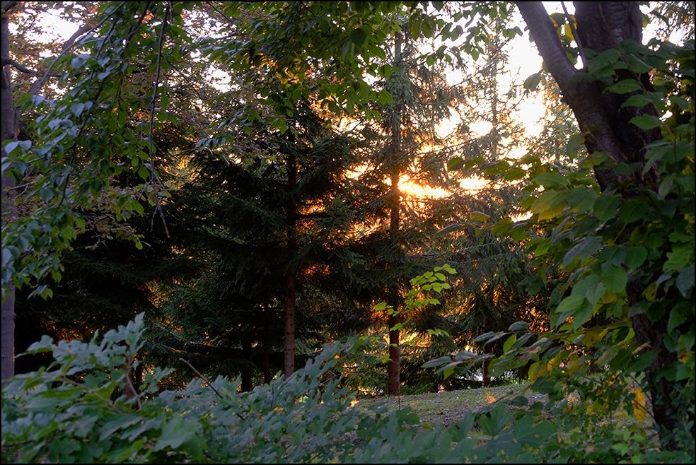 木漏れ日に囲まれての夕方のお散歩でした_a0031363_116129.jpg