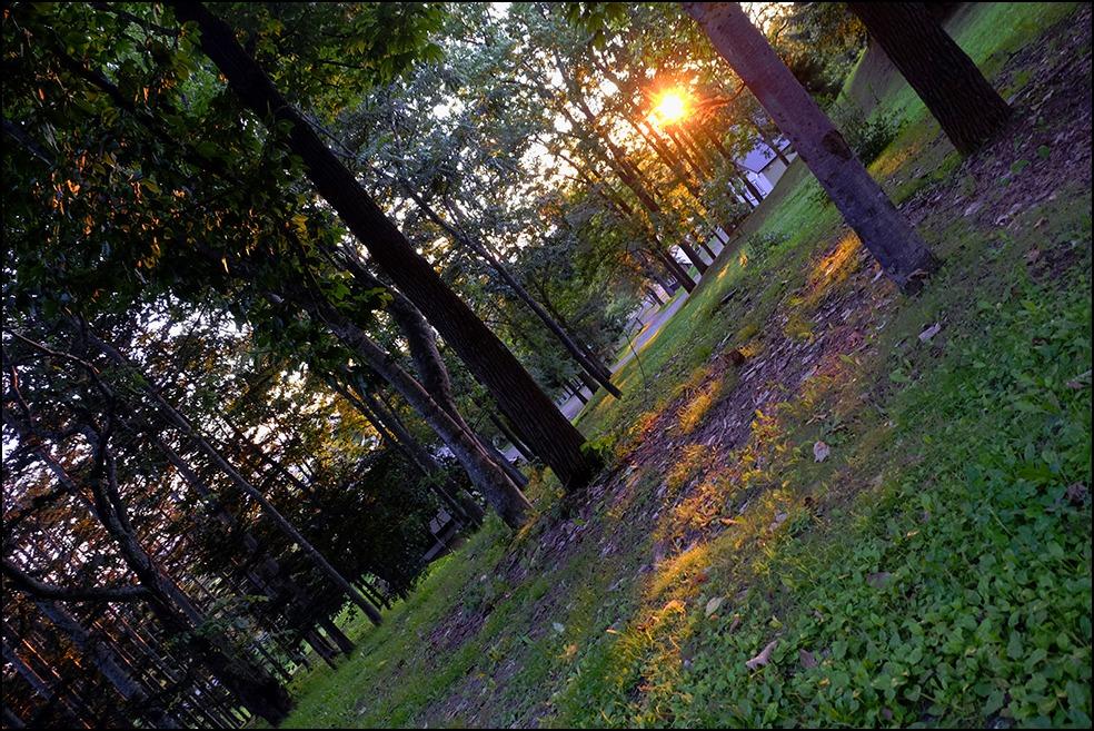 木漏れ日に囲まれての夕方のお散歩でした_a0031363_1164153.jpg