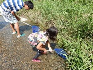 2015山科川ガサガサ探検隊+川の安全講習_e0008880_16323686.jpg