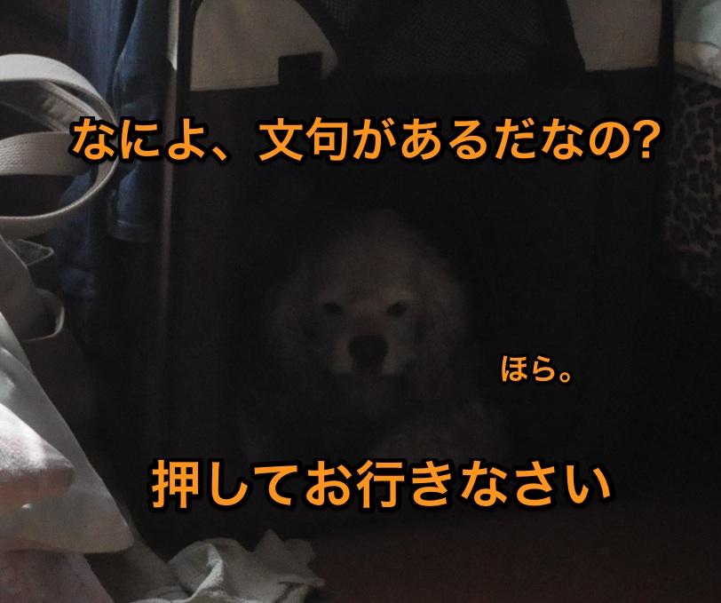 b0067012_0515833.jpg