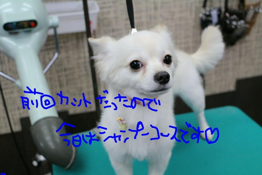 b0130018_00204710.jpg