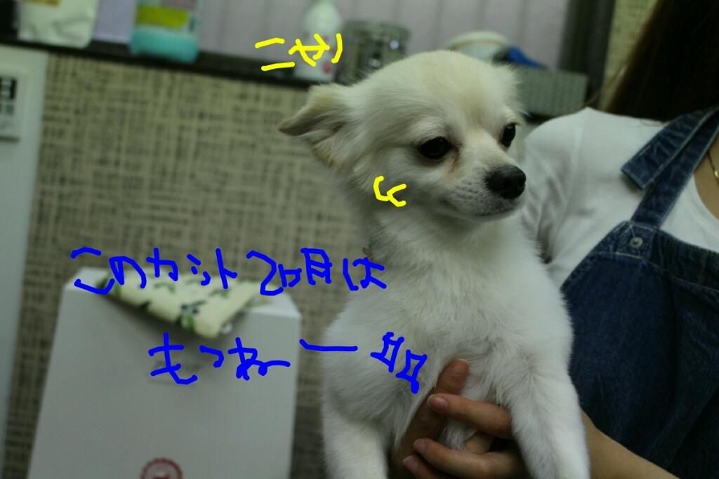 b0130018_00205016.jpg