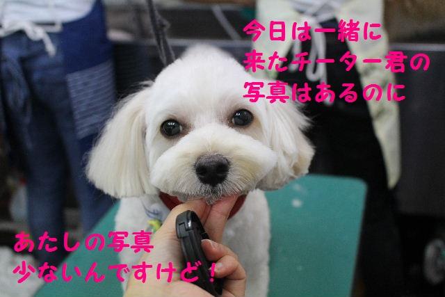 b0130018_2010074.jpg