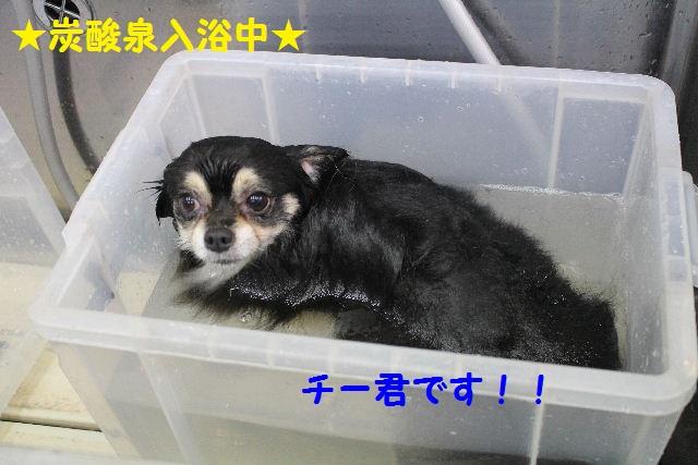 b0130018_20101354.jpg