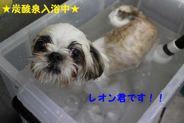 b0130018_20121039.jpg