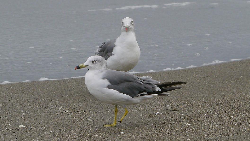 浜 辺 の 風 景 No.31_d0039021_1834211.jpg