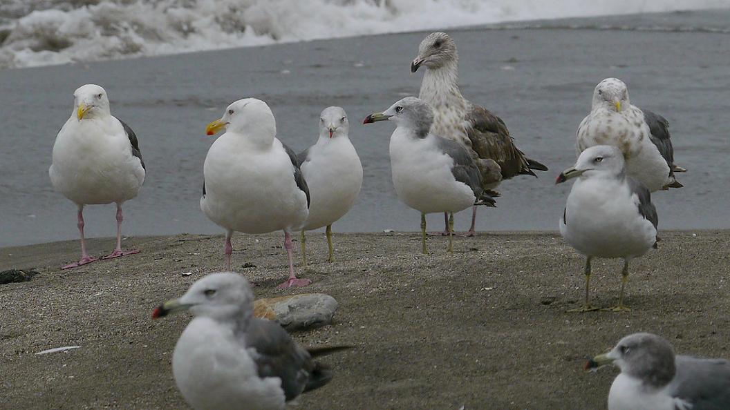 浜 辺 の 風 景 No.31_d0039021_1834279.jpg