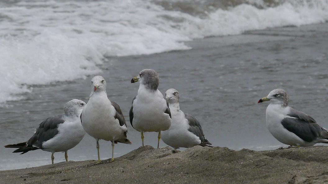 浜 辺 の 風 景 No.31_d0039021_1834340.jpg