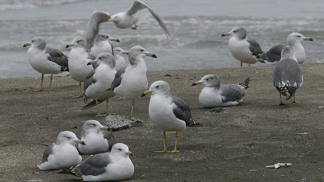 浜 辺 の 風 景 No.31_d0039021_1834954.jpg