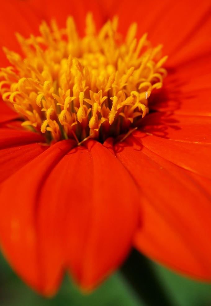 【Myファームの花達4月~8月末迄】あきのデジBookにて ご紹介です♪_b0033423_23953100.jpg