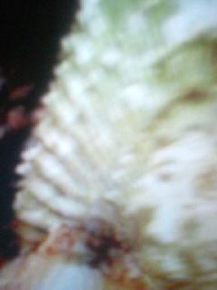 b0136144_0371910.jpg