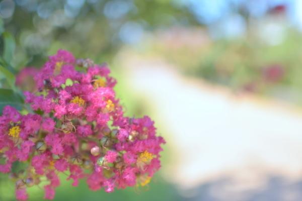 ひさしぶりのお散歩PHOTO♪_c0345348_15133960.jpg