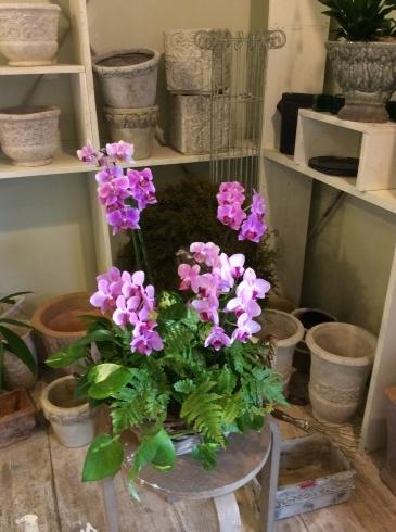 これから、続々と秋の花が入荷して来ます_b0137969_20332871.jpg