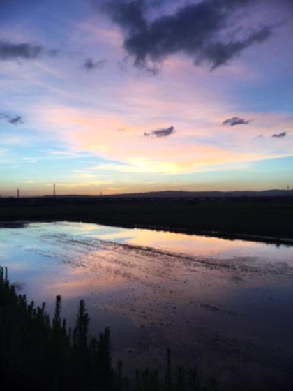 朝散歩、夕暮れ散歩 〜夏の終わりの空を見ながら〜_d0077603_10395334.jpg