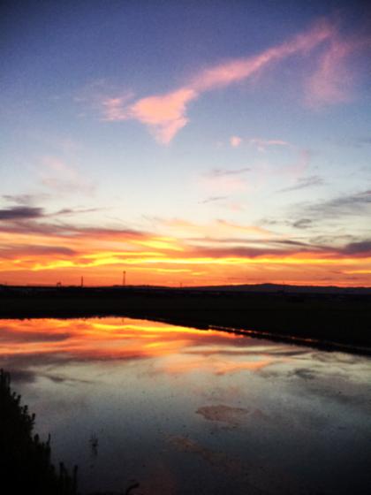 朝散歩、夕暮れ散歩 〜夏の終わりの空を見ながら〜_d0077603_10402642.jpg